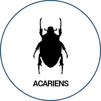 Acariens