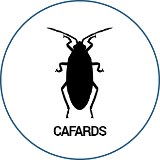 Cafards